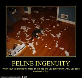 FELINE INGENUITY