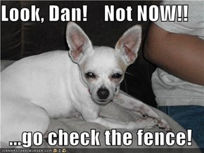 Look, Dan!    Not NOW!!  ...go check the fence!