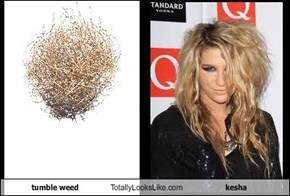 tumble weed Totally Looks Like kesha