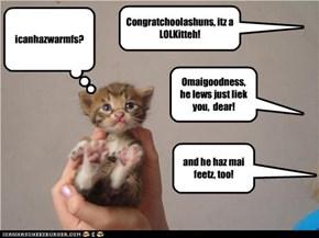 Congratchoolashuns, itz a LOLKitteh!