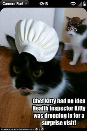 Chef Kitty had no idea Health Inspector Kitty was dropping in for a surprise visit!