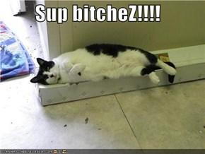 Sup bitcheZ!!!!