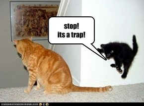 stop! its a trap!