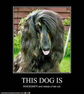 THIS DOG IS