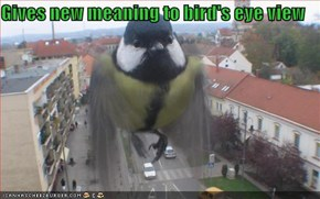 Gives new meaning to bird's eye view