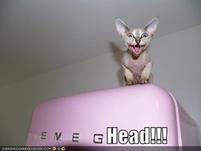 Head!!!