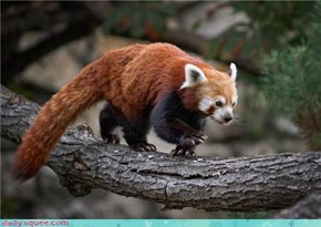 Squee Spree: Expert Climbers