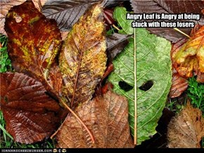 Angry Leaf is angry