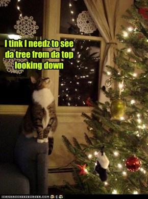 I tink I needz to see da tree from da top looking down