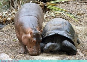 Interspecies Love: Sharing Noms