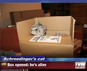 Schroedinger's cat - Box opened: he's alive