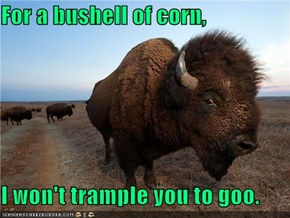 For a bushell of corn,  I won't trample you to goo.