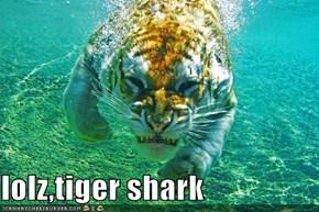 tighurrr shark