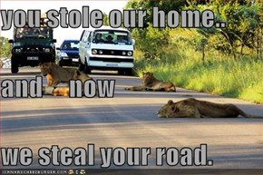 you stole our home.. and     now we steal your road.