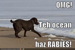 OMG! Teh ocean haz RABIES!