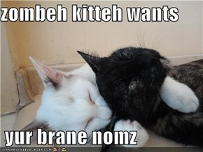 zombeh kitteh wants   yur brane nomz