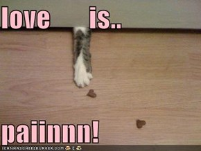 love       is..  paiinnn!