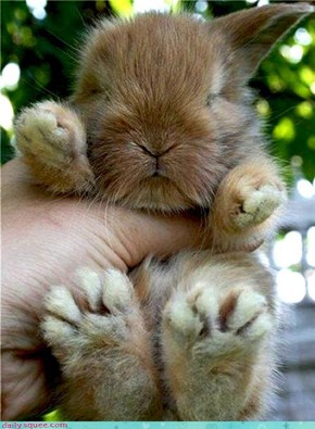 Bunday: Big Foot