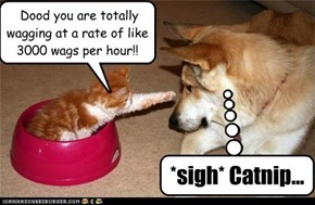 Dood you are totally wagging at a rate of like 3000 wags per hour!!~~ *sigh* Catnip...