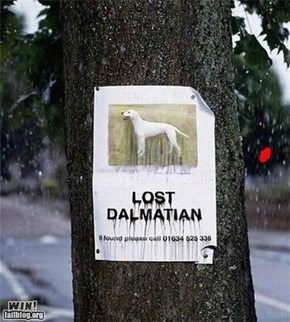 Lost Dalmation WIN