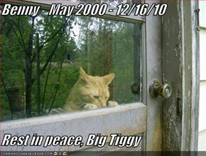 Benny    May 2000 - 12/16/10  Rest in peace, Big Tiggy