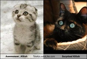 Awwwwww...Kitteh Totally Looks Like Surprised Kitteh