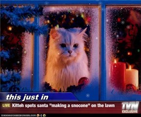 "this just in - Kitteh spots santa ""making a snocone"" on the lawn"