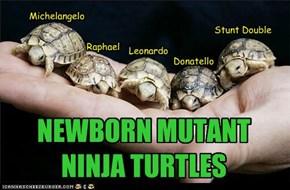NEWBORN MUTANT NINJA TURTLES