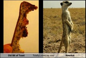 Old Bit of Toast Totally Looks Like Meerkat