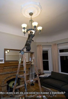 How many cats do you need to change a lightbulb?