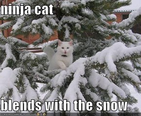 ninja cat  blends with the snow