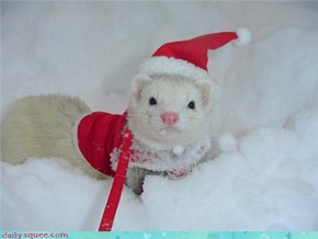 Here Comes Kipling Claus!
