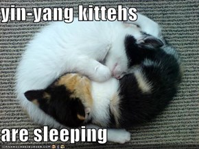 yin-yang kittehs  are sleeping