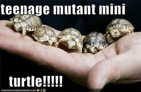 teenage mutant mini      turtle!!!!!
