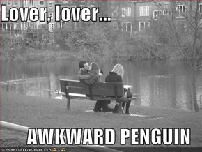 Lover, lover...  AWKWARD PENGUIN