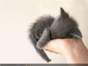 Cyoot Kitteh of teh Day: Palmful of Sleepy Squee