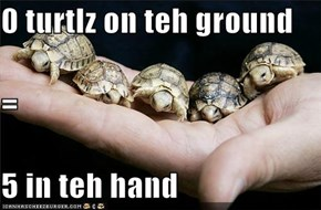 0 turtlz on teh ground = 5 in teh hand