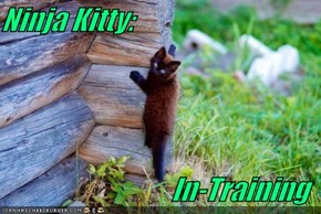 Ninja Kitty:  In-Training