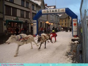 Reindeer racing in Norway