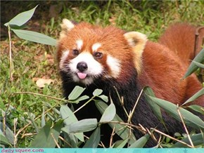 Squee Spree: Plucky Red Panda