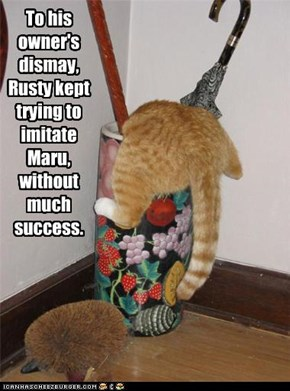To his owner's dismay,  Rusty kept trying to imitate Maru, without much success.