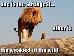 one is the strongest... other is the weakest of the wild...