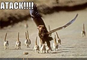 ATACK!!!!