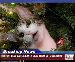 Breaking News - CAT SEES SANTA, SANTA DEAD FROM CUTE OVERLOAD