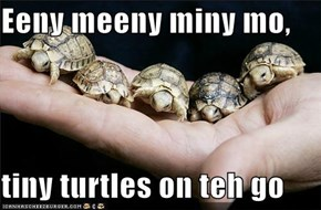 Eeny meeny miny mo,  tiny turtles on teh go