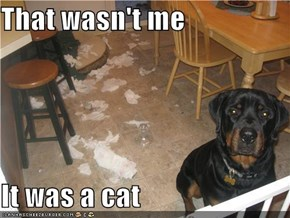 That wasn't me  It was a cat