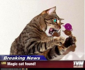 Breaking News - Magic cat found!