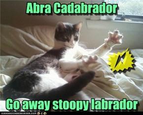 Abra Cadabrador      Go away stoopy labrador