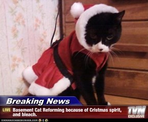 Breaking News - Basement Cat Reforming because of Cristmas spirit, and bleach.
