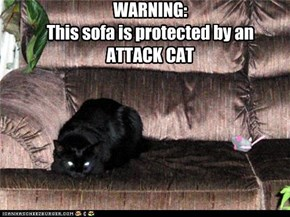 WARNING: This sofa is protected by an  ATTACK CAT